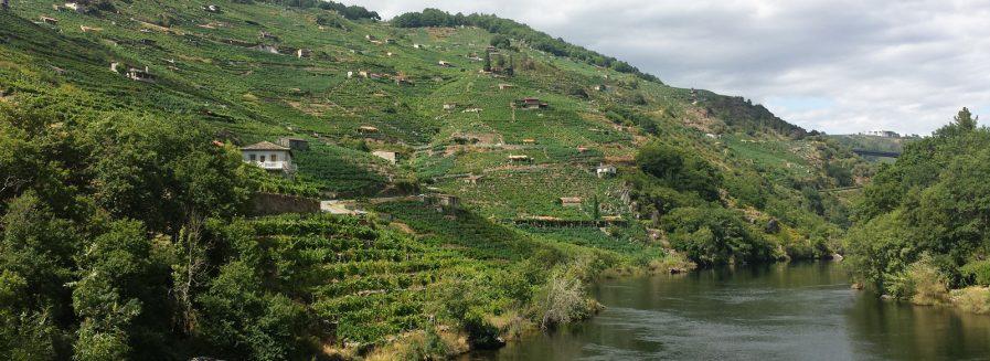 Nuevos vinos gallegos del Club Vignerons