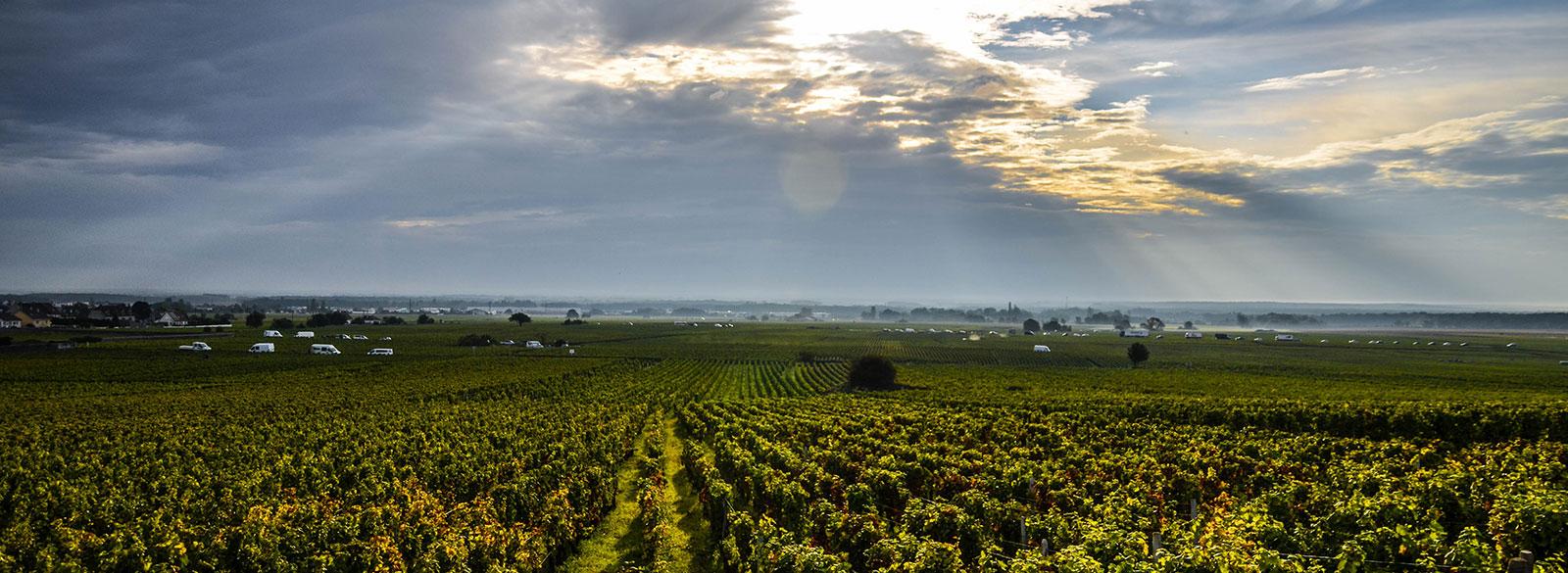 Las parcelas o climats en Borgoña