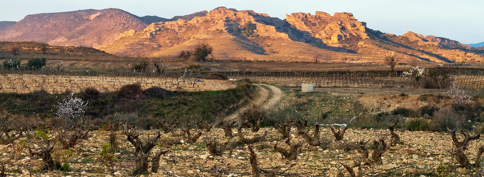 Los vinos de Aragón, Gredos y Navarra que debes tener en tu radar