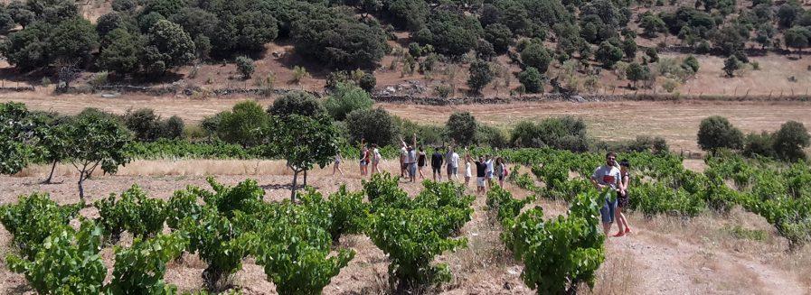 Catando en viña: el equipo Bodeboca en Gredos