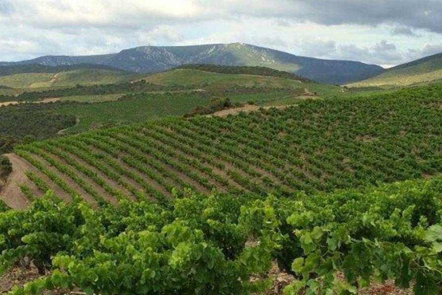 Languedoc, el secreto mejor guardado de Francia