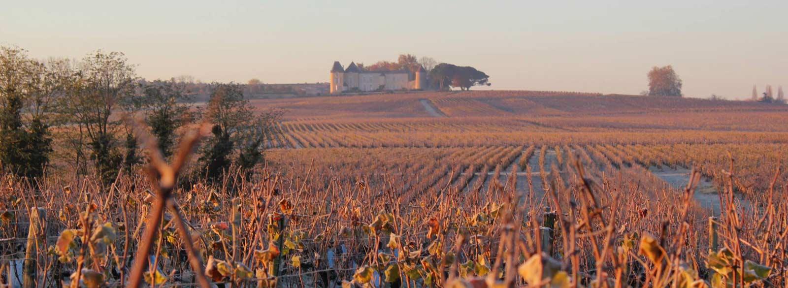 12 cosas que no sabías sobre Château d'Yquem (el mejor vino dulce del mundo)