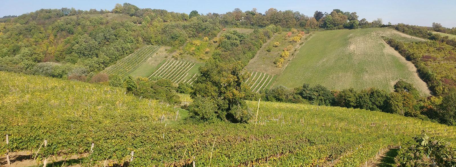 Un día entre viñedos austriacos descubriendo el sturm