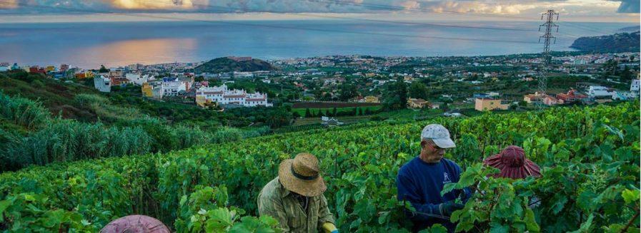 Vinos volcánicos: al son del terruño
