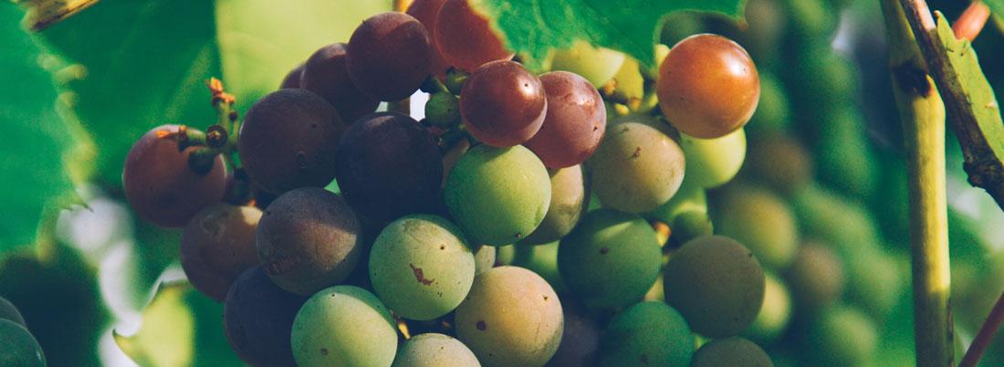 Cinco uvas latinoamericanas a las que prestar atención