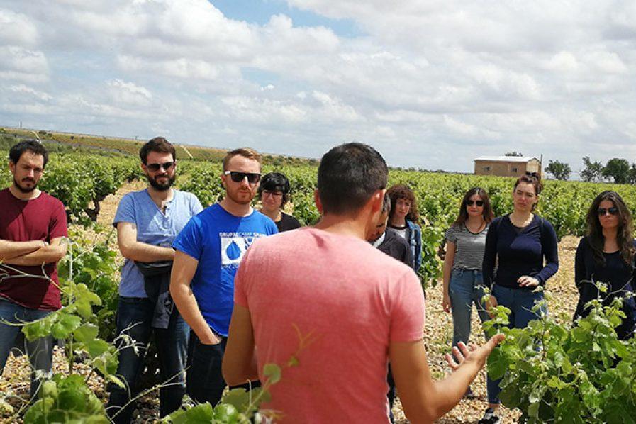 Catando en viña: el equipo Bodeboca en Ponce