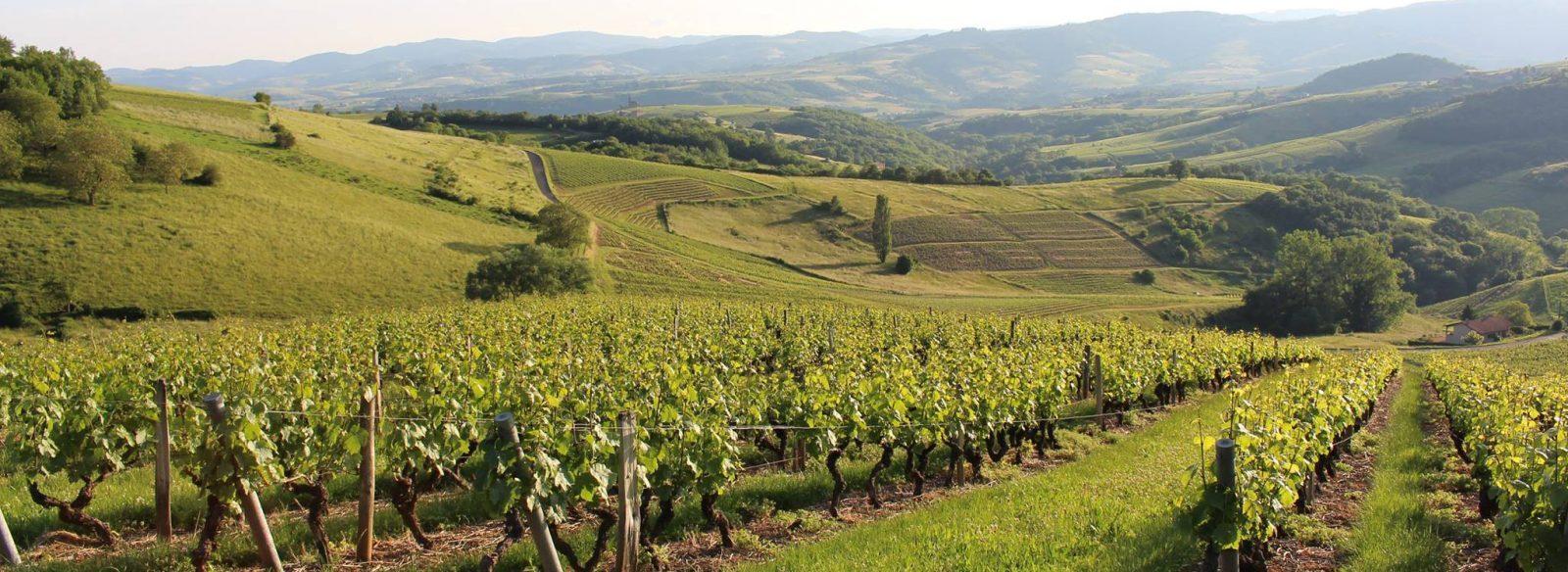 Mâconnais y Beaujolais, donde nacen los vinos más asequibles de Borgoña