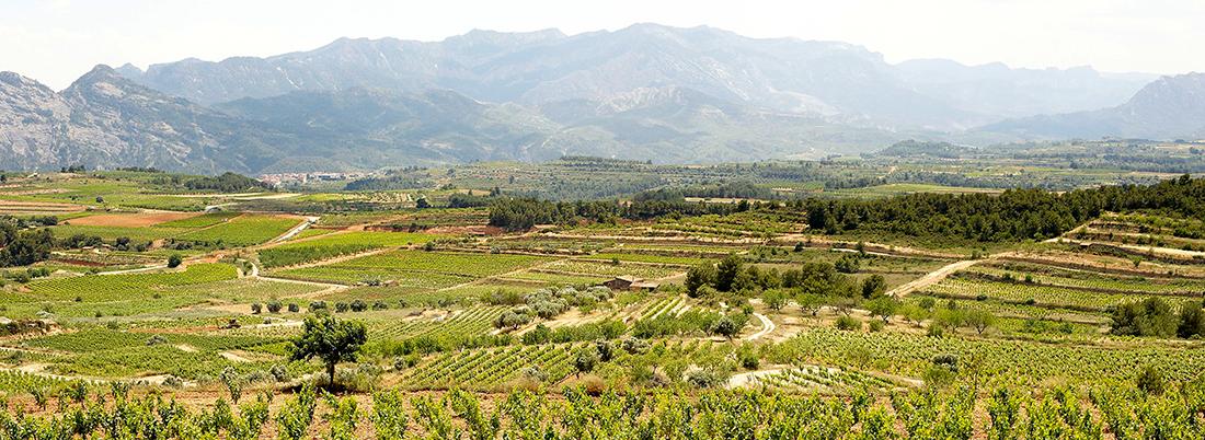 7 vinos de la Terra Alta, la comarca que da título al último Premio Planeta