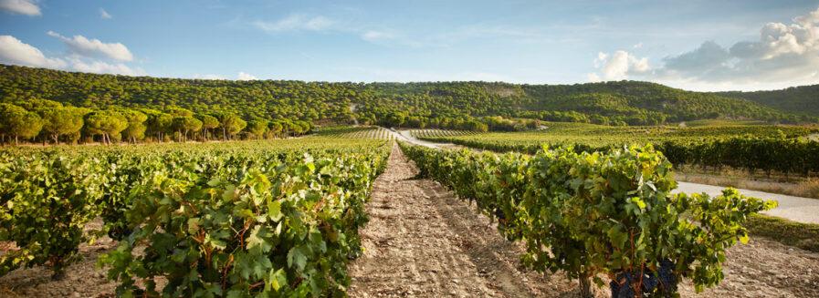 ¿Cuál es el vino más caro de España?