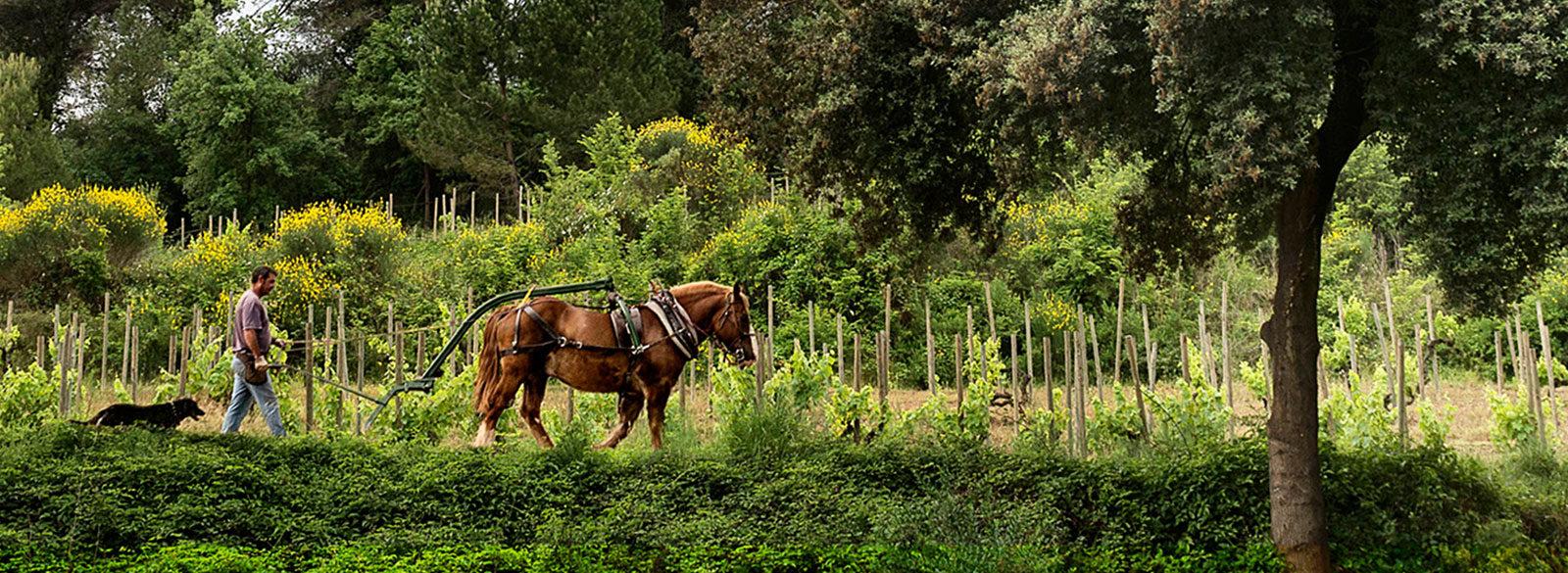 Futuro viñador, la revolución silenciosa del viñedo español