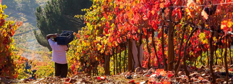 El Bierzo: nuestra particular Borgoña