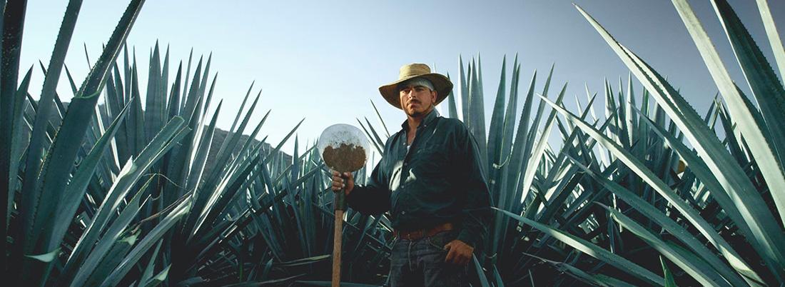 Tequila y mezcal, orígen común