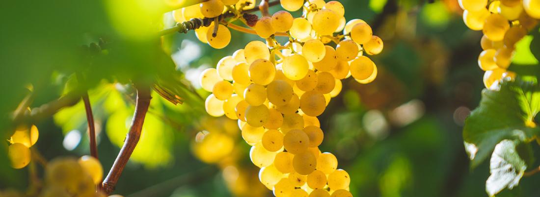 Chardonnays españolas para cada momento