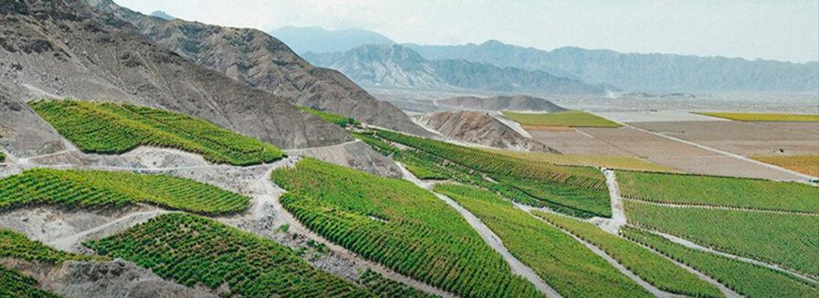 Descubriendo el vino peruano