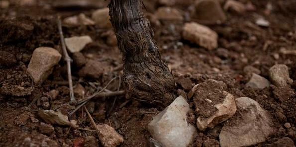 Suelos arcillosos del viñedo El Encinar