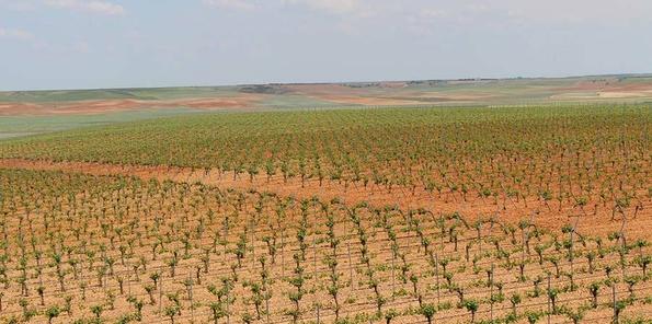 Panorámica de los viñedos de Álvarez y Díez