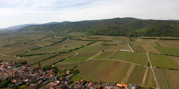 Vista aérea del viñedo