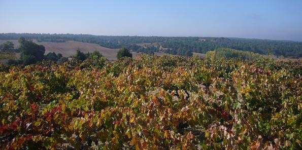 Vistas de las viñas