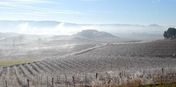 Vista de las viñas heladas en invierno