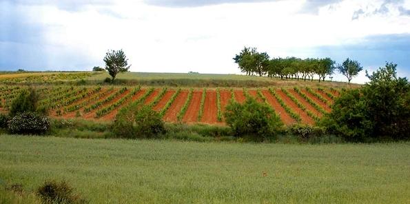Una parte de las 4 hectáreas de Coruña del Conde