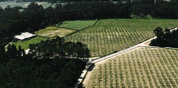 Una parte de las 5 hectáreas de viñedo de la bodega