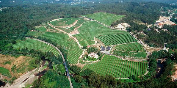 Imagen aérea de los viñedos