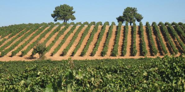 Una de las laderas sobre las que se ubican las viñas