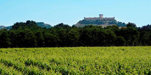 Viñedos con el castillo de Peñafiel al fondo
