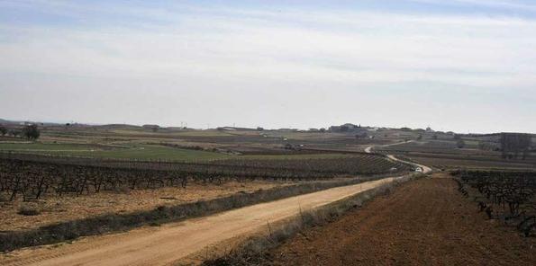 Uno de los caminos que conducen a la viña de Loess