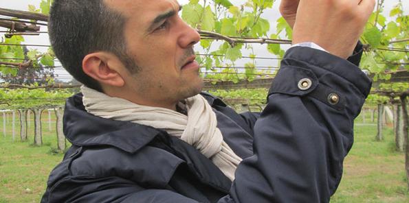 Manyo en el viñedo