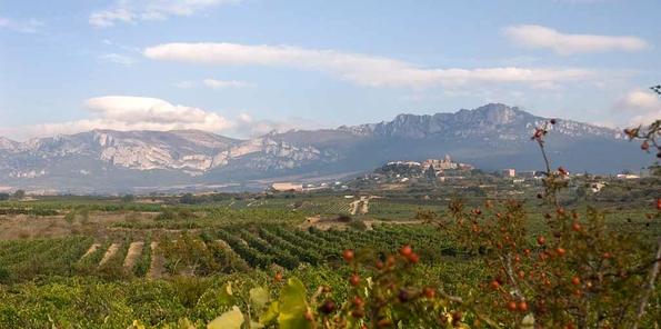 Panorámica de viñedos de Tempranillo