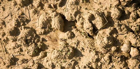 Detalle de los suelos