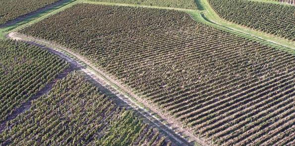 Vista aérea de los viñedos en Pomerol