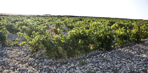 Uno de los viñedos utilizados por Rolland y Galarreta