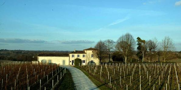 Viñedos y al fondo el château