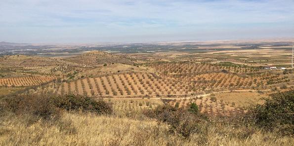 Panorámica de viñedos en Cariñena