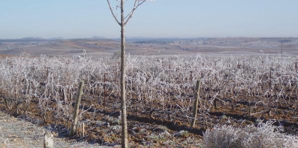 El viñedo en invierno