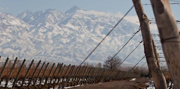 Las viñas mendocinas, nevadas