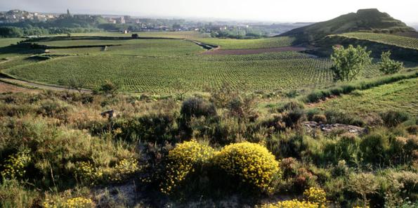 Panorámica del viñedo de Roda