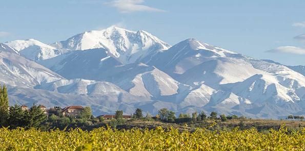 Viñedos a los pies de los Andes