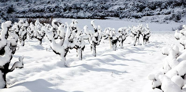 Nieve en Heredad Llopart
