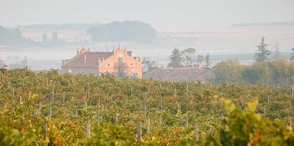 Vista de viñedo y caserío al fondo