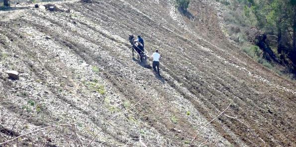 Mula realizando labores de campo en costers