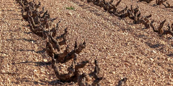 Característicos suelos marrones de la zona
