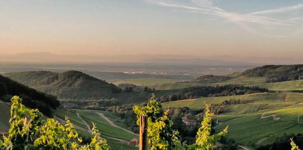 Panorámica de los viñedos alemanes de Domaine Schieferkopf