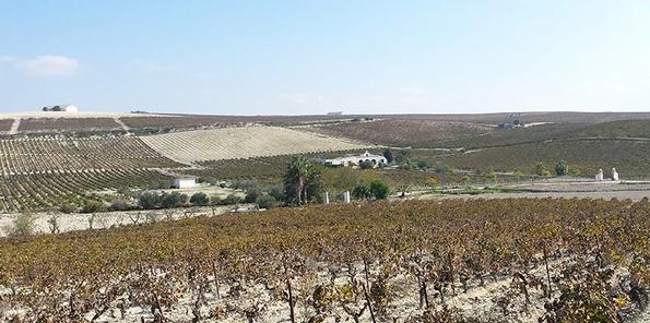 Viñas Santa Petronila