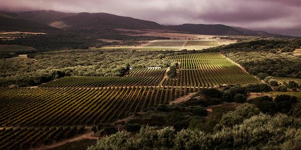 Viñedos en la Rioja Alta