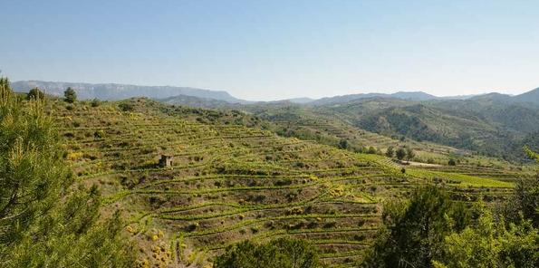 Vista del viñedo