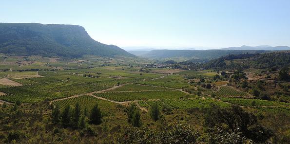 Panorámica de viñedos en el Rousillon