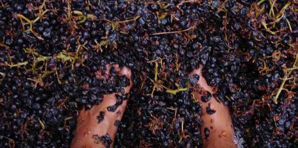 Pisado suave de las uvas